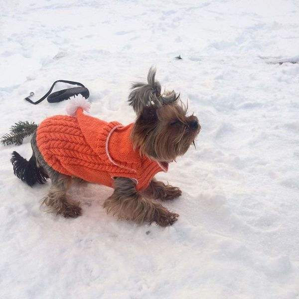 Кофточка на собаку «Апельсинка»